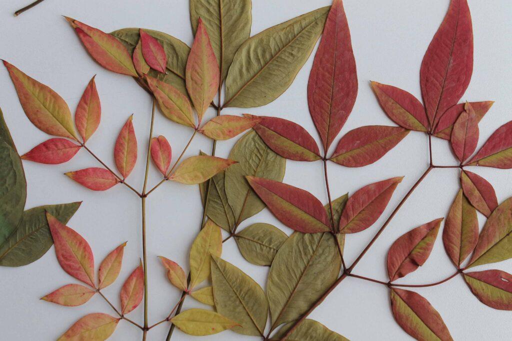 zero waste thanksgiving leaves