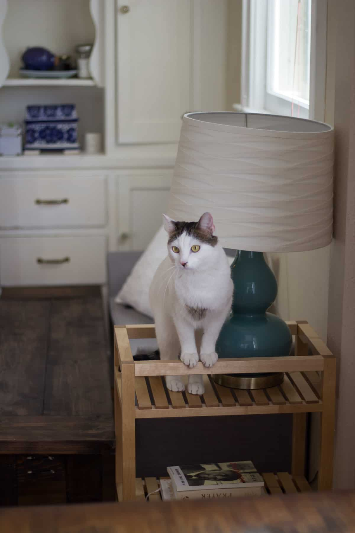 How I Keep My Home Smelling Fresh (Even With Pets)