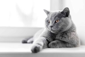 A guide to zero waste cat litter
