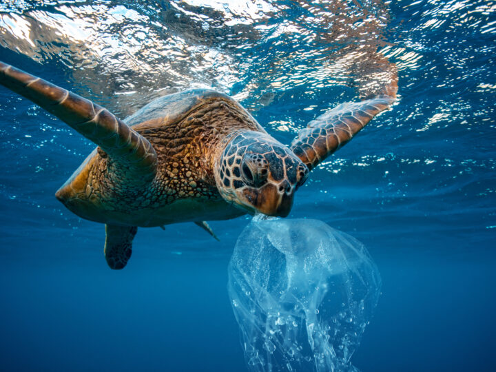 How Does Trash Get in the Ocean? (And What You Can Do to Minimize the Risk!)